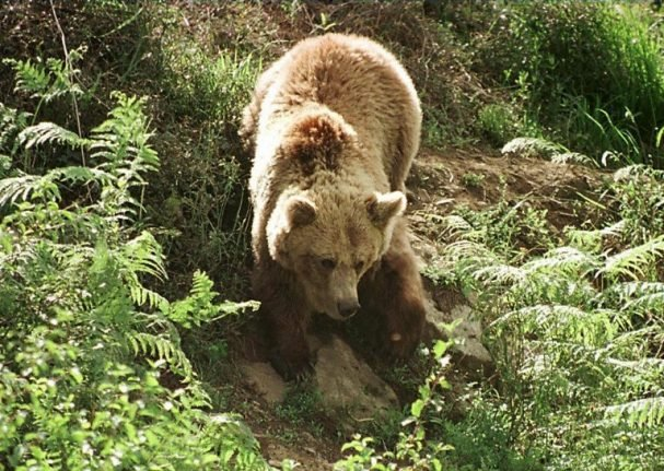 VIDEO: Late night bear encounter in northern Spain sparks anger