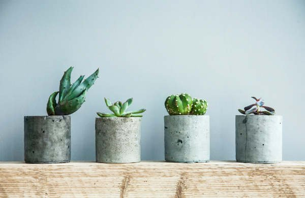 A growing Swedish trend: why succulents are a must-have for any Scandi home