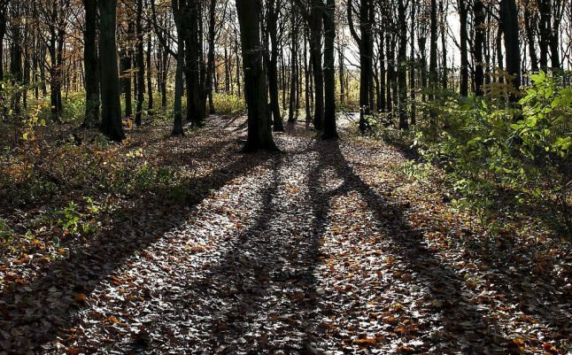 Conservative parties agree deal to protect Danish forests