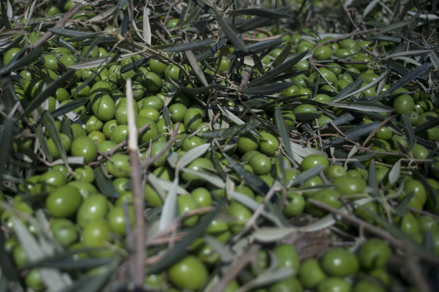Trump hikes import tax on Spanish olives in deal to make America great again