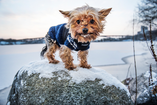Wrap up warm: How to dress for the cold winter in Sweden