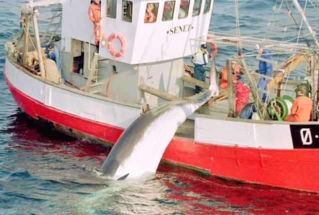 Norway boosts quotas to revive whaling, despite environmentalist opposition