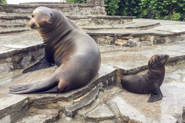 Sea lions' nighttime ruckus leads to Cologne Zoo's first ever squabble with neighbours