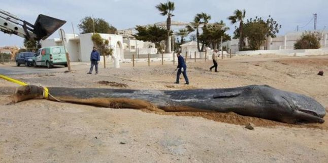 Clean seas campaign launched on Spanish coast after sperm whale beached full of plastic