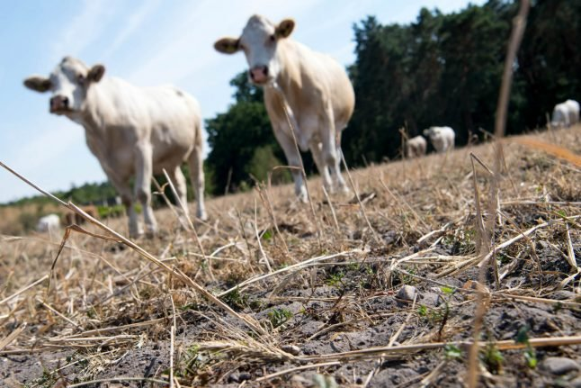 Heatwave could lead to rising food prices, farmers warn