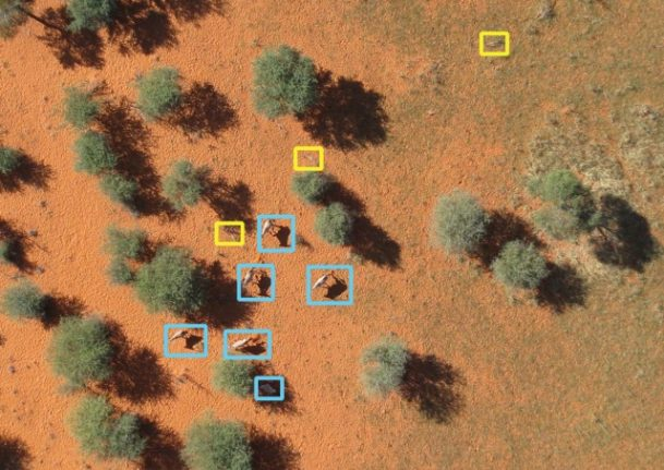 How Swiss software is helping drones survey wildlife in Namibia