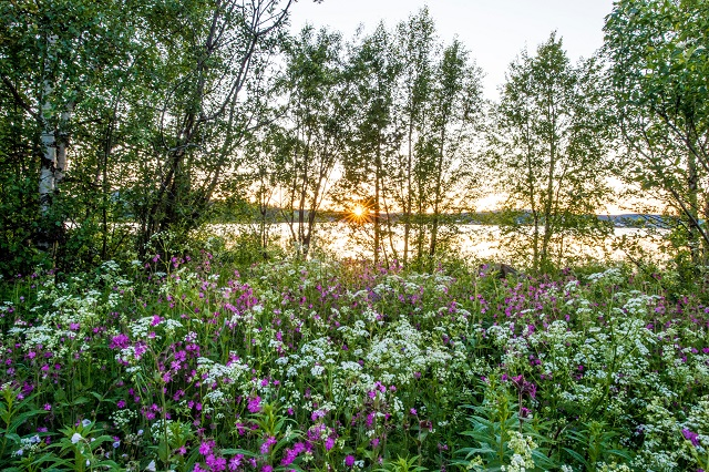 Five great reasons to move to northern Sweden