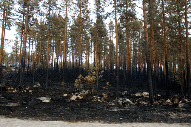 Total fire ban enforced in several counties across Sweden