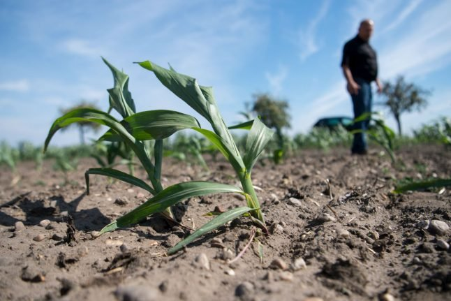 Shorter fries and sunburned cows : Why the farmer's crisis matters