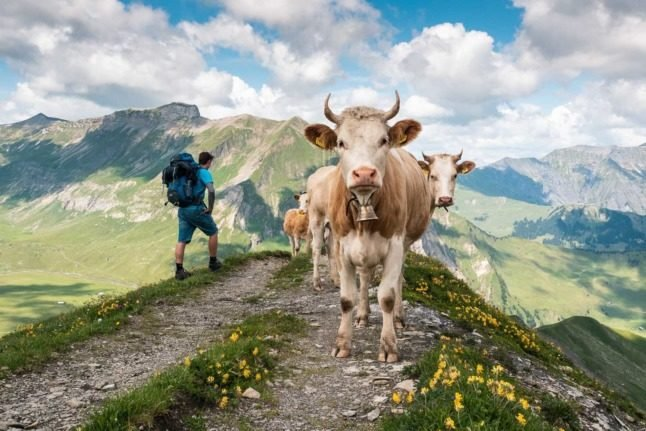 16 things that only happen in Switzerland