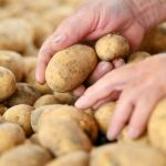 Drought causes potato prices to rise by more than half - and they have more flaws