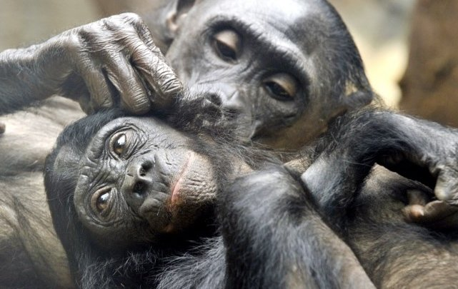 Swiss canton to vote on giving basic rights to primates