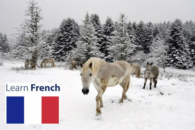 Swathes of France set to become winter wonderland with heavy snow forecast
