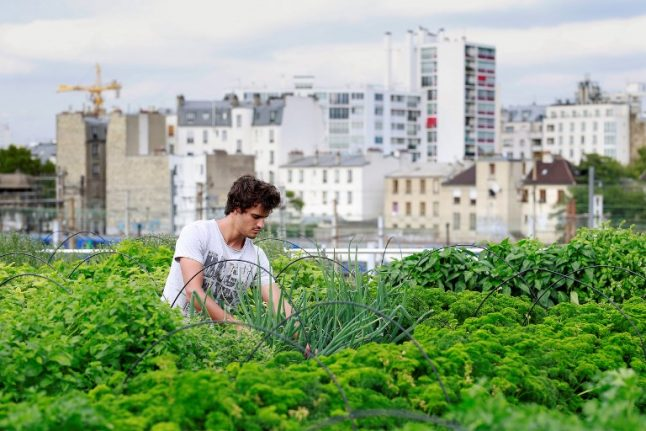 In France and beyond, the race is on to make urban agriculture viable