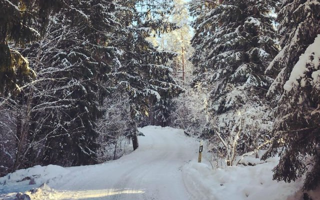 Off-piste: Brits in remote Swedish areas wary of Brexit path ahead