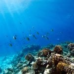 'Like the Maldives': Italy's first coral reef discovered off the coast of Puglia