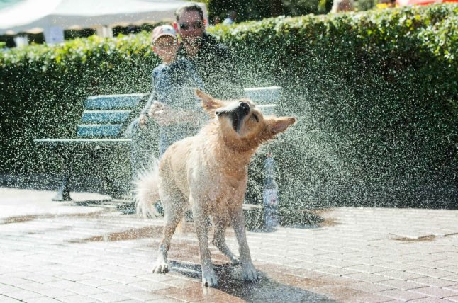 'A life without a dog is a mistake': Germany's passion for pooches