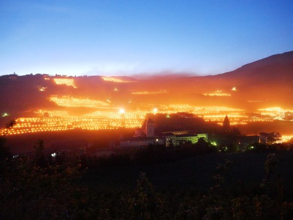 Why are Italian winemakers setting their vineyards ablaze?