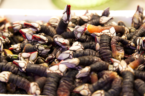 Ten delicious Spanish dishes you must try before you die