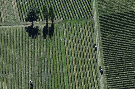 French wine production harmed by record heatwave