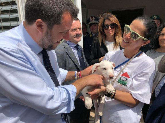 Italy's Salvini and Berlusconi bet on pets to woo voters