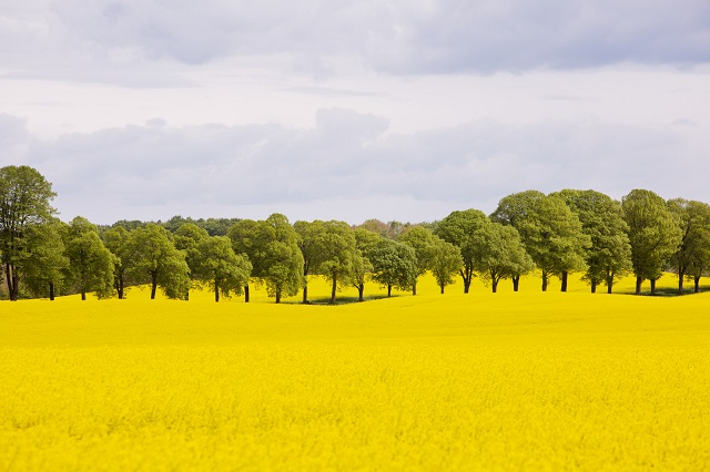 Share your tips: What are the best and worst things about life in Skåne?