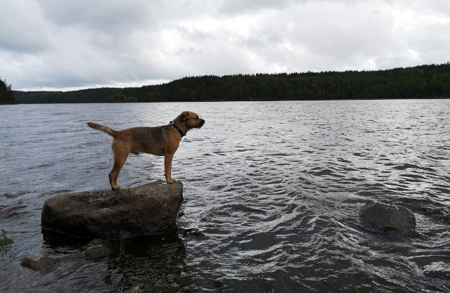 Moving to Sweden with a dog: How we adjusted to life in Gothenburg