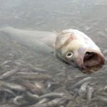 Why have thousands of dead fish washed up in southern Spain?