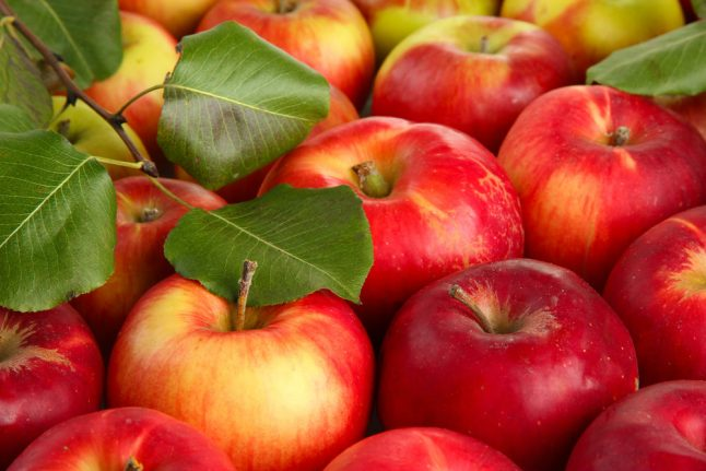 Norway's apples are ripening in record time