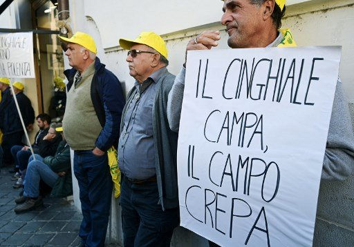 'They destroy everything': Italian farmers protest rising number of wild boars
