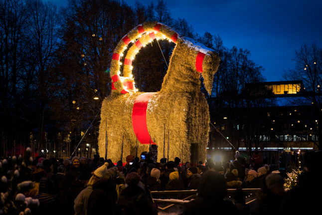 New Year Record: Swedish straw goat survives third Christmas in a row