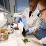 Medical marijuana is now free of charge in Sicily