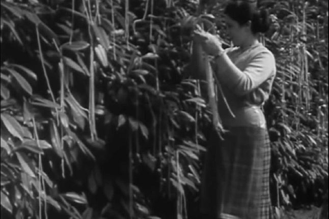 The Swiss Spaghetti harvest: The most successful April Fools' Day prank of all time