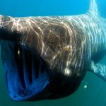 Shark sightings and minor attacks on the rise as bathers return to Spanish beaches