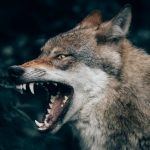 Go to the forest! Swedish phrases to use when you're angry