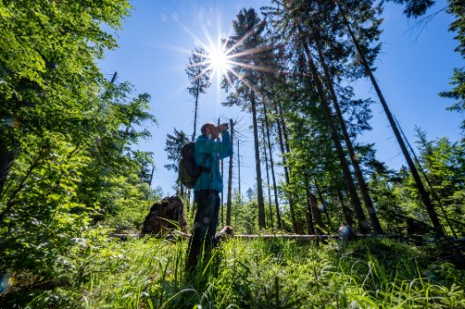 The story of Germany's oldest national park as it turns 50