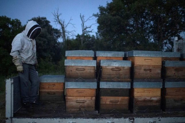 'Truly inexplicable': Why did four million bees die overnight in northern Italy?