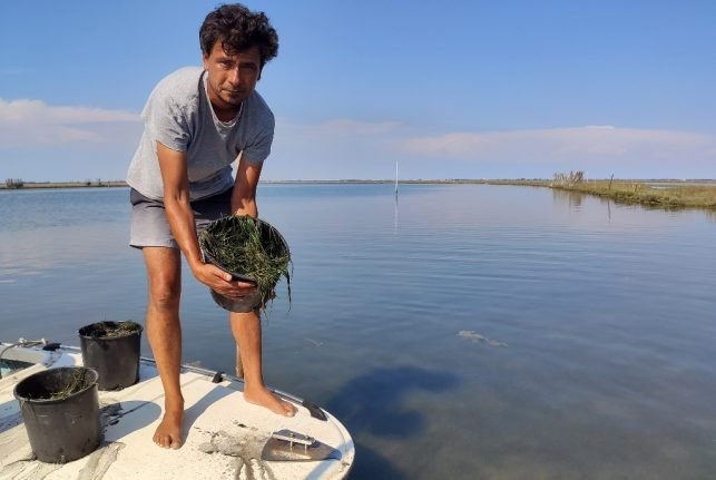 How Italian researchers and fishermen are working to restore Venice's lagoon