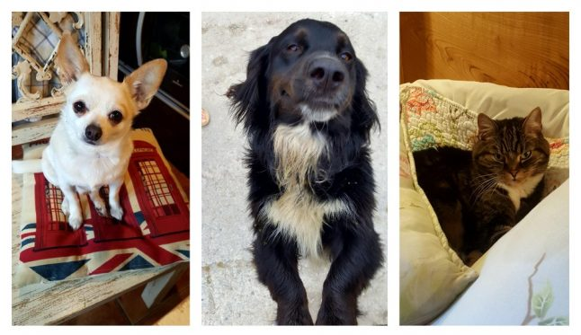 OPINION: The pleasures (and perils) of relocating to rural Spain with pets