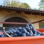 How are Italy's wine producers coping with the coronavirus crisis?