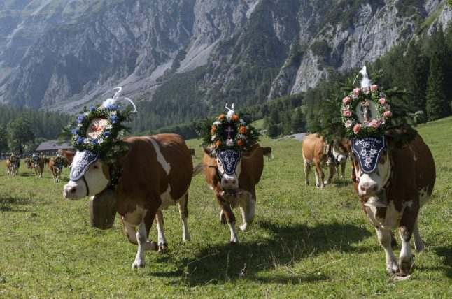 Changing economy and climate hit Austria's Alpine pastures