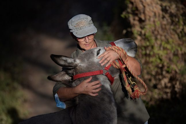 What's up doc? How Donkey therapy is easing Spain medics' stress