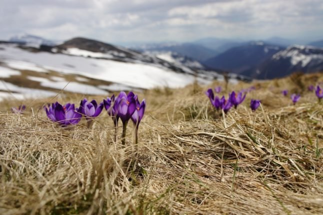 Norway could soon feel warmer with respite from cold forecast