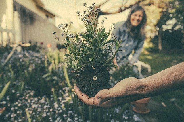 Flowers, seedlings and bulbs - what are the rules on bringing plants from the UK to France?