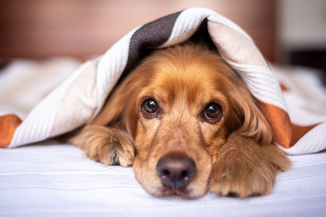 Renting in Spain when you have a pet: What are my rights?