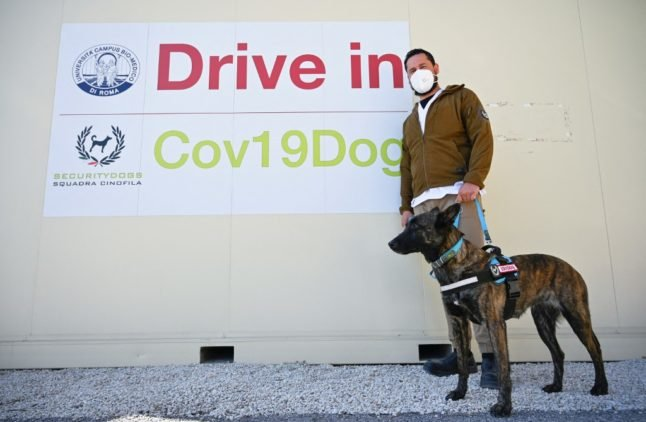 Sit, stay, sniff: Italy trains Covid-19 detection dogs to smell out virus