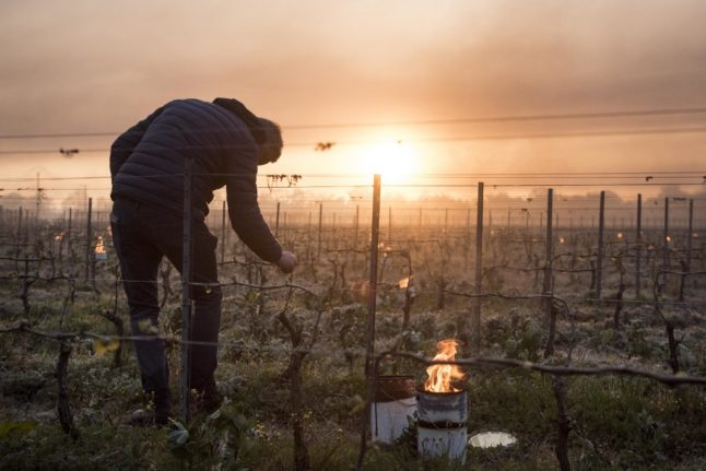 'Third of French wine production lost' due to cold snap