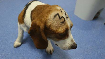 'Gratuitous cruelty': Spain probes suspected abuse at animal testing lab