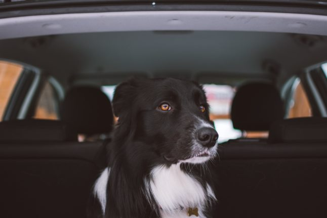 travelling to Spain with your dog