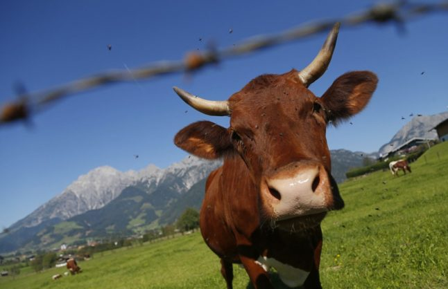 Today in Austria: A round up of the latest news on Thursday